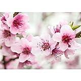Vlies Fototapete PREMIUM PLUS Wand Foto Tapete Wand Bild Vliestapete - Blumen Blüten Blätter Frühling Sommer - no. 2106, Größe:254x184cm Vlies