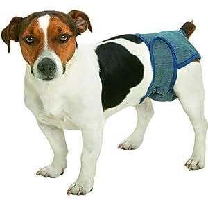 Culotte sécurité anti sexe pour chienne