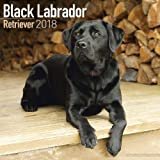 Black Labrador Retriever Calendar 2018 (Square)