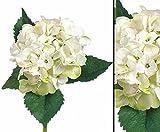 Kunst Blume Hortensie, mit weißer Blüte Durch. 15cm, wasserfesten Stiel, Länge 48cm - Kunstpflanze künstliche Blumen Kunstblumen Blumensträuße künstlich, Seidenblumen oder Blumen aus Plastik Kunststoff </p> --> großes Kunstblumen Sortiment