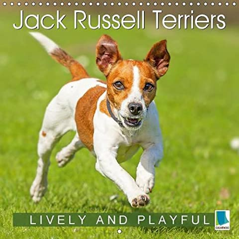 Jack Russell Terriers Lively and Playful 2017: Jack Russell Terriers - Cheerful Puppies