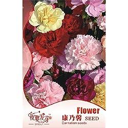 Pinkdose2018 heißer Verkauf 1 Original Pack, 40 Samen/Pack, Mix Nelke Blumensamen Dianthus Caryophyllus # NF253