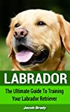 Labrador: The Ultimate Guide for Training Your Labrador Retriever (Dog Training, Labrador Puppy, Guide Dog)