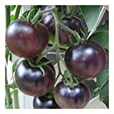 Premier Seeds Direct Tomate Schwarze Kirsche enthaelt 150 Samen