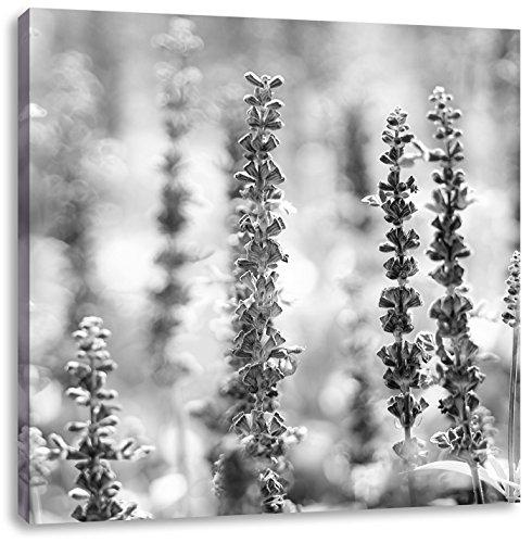 schöne violette Lavendelblüten Kunst B&W, Format: 60x60 auf Leinwand, XXL riesige Bilder fertig gerahmt mit Keilrahmen, Kunstdruck auf Wandbild mit Rahmen, günstiger als Gemälde oder Ölbild, kein Poster oder Plakat