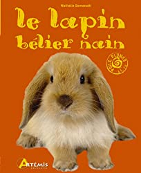 LAPIN BELIER