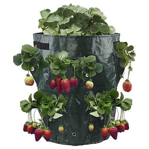 faa62528ed Jycra 11 Gallon Fraise plantation pour sac de croissance, respectueux de  l'environnement Fraise