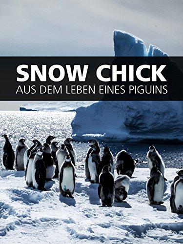snow-chick-aus-dem-leben-eines-pinguins