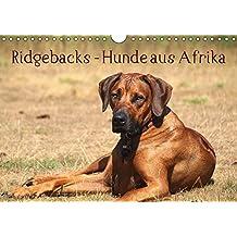 Ridgebacks - Hunde aus Afrika (Wandkalender 2019 DIN A4 quer): Faszination Rhodesian Ridgeback - ein Portrait dieser tollen Rasse (Monatskalender, 14 Seiten ) (CALVENDO Tiere)