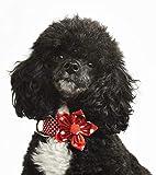 The English Beagle Halsband mit Blume, gepunktet, Rot