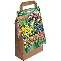 101 Flower Bulb Collection - Big Buy Value Pack - 6 Spring Flowering Varieties (Pack of 101)