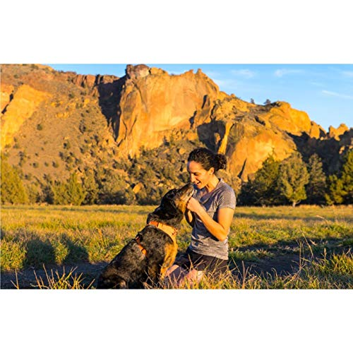 Ruffwear All Day Adventure Dog Harness, Medium Breeds, Adjustable Fit, Size: Medium, Orange Poppy, Front Range Harness, 30501-801M