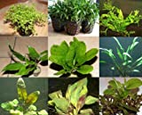 15 Töpfe 7 Sorten Aquarienpflanzen, Wasserpflanzen
