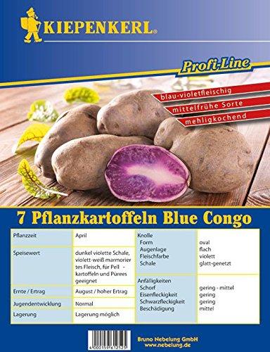 Kartoffel Blue Congo 5 Stück (blau-violett, mehligkochend, mittelfrüh) | Pflanzkartoffeln von Kiepenkerl