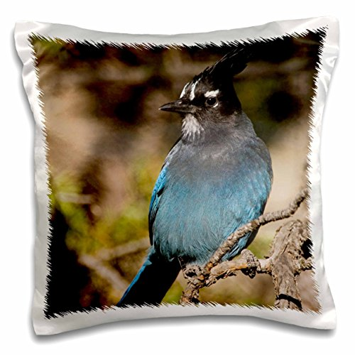 3dRose PC 84619 Antennenkabel 1 Diademhäher Vogel, Rocky Mountain NP, colorado-na02 rnu0799-rolf nussbaumer-Pillow Fall, 16 von 40,6 cm Rocky Mountain Quilt