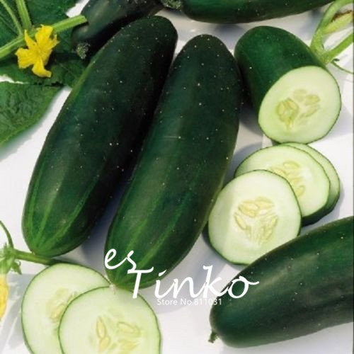 Obtentions Arrivée concombre Jardinerie plante concombre légumes Graines Cucumis Facile Plantation 30 pcs 07