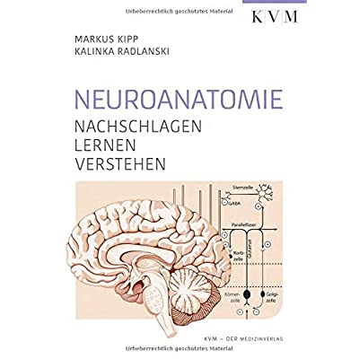 PDF] Neuroanatomie: Nachschlagen - Lernen - Verstehen KOSTENLOS ...