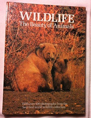 Wildlife the Beauty of Animals