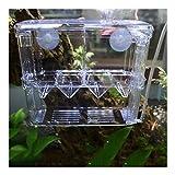 Young Fish Breeding Box Tank for Fish Transparent Fish Breeder Box Fish Egg Hatchery Young Fish Isolation Box