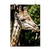 Girafe Photo Art Animal africain Animal Matte/Glacé Affiche A2 (60cm x 42cm) | Wellcoda