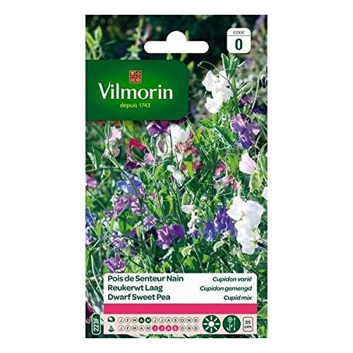 Vilmorin - Sachet graines Pois de senteur Cupidon varié