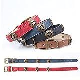 Lushpetz Leder Hundehalsband mit Stern Nieten in Schwarz, Braun, Blau und Rot für Mittlere und große Rassen