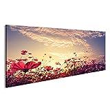 islandburner Bild Bilder auf Leinwand Landschaft Natur Hintergrund der schönen Rosa und Roten Kosmos Blume Feld mit Sonnenschein. Vintage Farbton Wandbild, Poster, Leinwandbild FBA