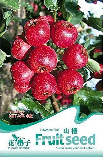 Pinkdose® 2018 Vendita Calda 5 Pacchetti Originali, 8 Semi/Scatola, Semi di biancospino, Frutta crataegi, Erbe Maybush Semi Maytree
