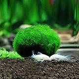 Moos Ball Künstliche Daxibb Aquarium Aquarium Decor Ornament 2,5-4,5 cm Natürliche Pflanzen
