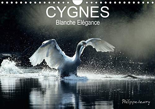 CYGNES. Blanche Elegance 2020: Les plus belles photos de cygnes prises dans des regions sauvages de France et de Finlande.