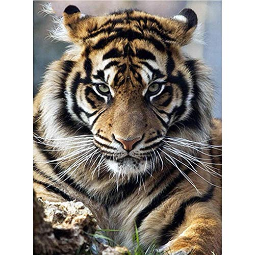 Akaddy 5D DIY bohren Voll Diamant malerei Tiger Stickerei