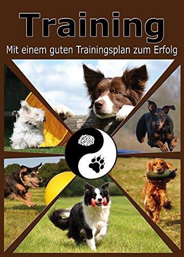hundetraining-training-mit-einem-guten-trainingsplan-zum-erfolg