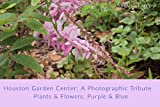 Houston Garden Center: A Photographic Tribute: Plants and Flowers: Purple & Blue (English Edition)