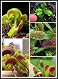 100PCS Dionaea Seeds Derlook flowers bon...