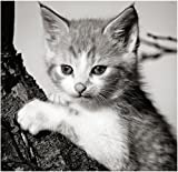 Stick It On Your Wall Kittens–Kätzchen Klettern Ein Drei Mini Poster–40x 40cm