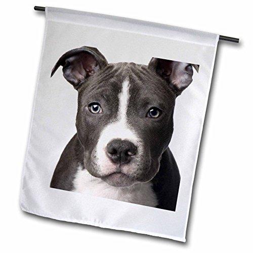3drose FL _ 4240_ 1American Pit Bull Terrier Welpe Garten Flagge, 12von 18