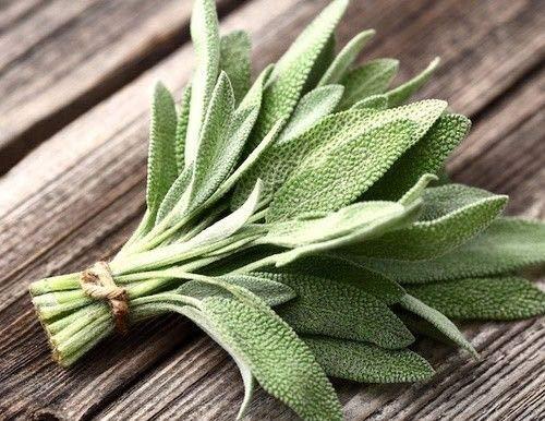Portal Cool 50 Seeds Of Aromatische Salbei (Salvia officinalis) - Salvia Officinalis-salbei