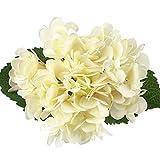 Silk Hydrangea Soledi Vintage Artificial Flower Arrangement Autumn Home Wedding Decor Bouquet (white green)