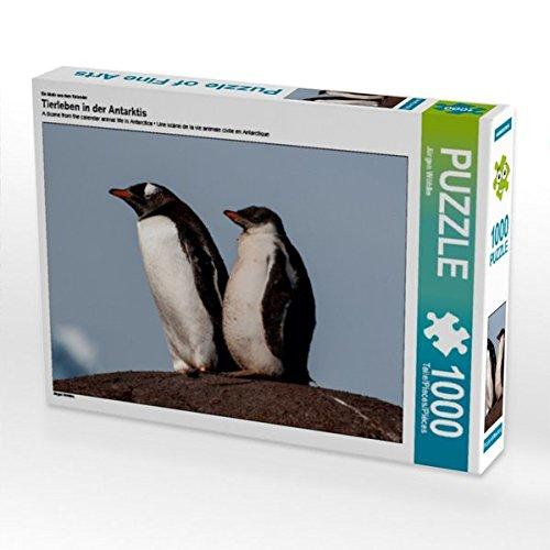 CALVENDO Puzzle Tierleben in der Antarktis 1000 Teile Lege-Grösse 64 x 48 cm Foto-Puzzle Bild Von Wöhlke JÃŒrgen