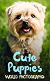 Cute Puppies: I Love Dogs Picture Book