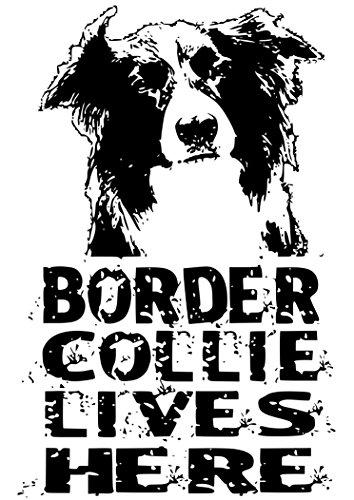 border-collie-lives-here-per-porta-finestra-adesivi-sign