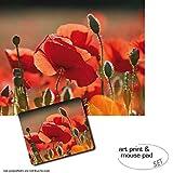 Geschenkset: 1 Poster Kunstdruck (50x40 cm) + 1 Mauspad (23x19 cm) - Mohnblumen, Rote Mohnblumen, Blüten Und Knospen