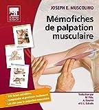 Mémofiches de palpation musculaire