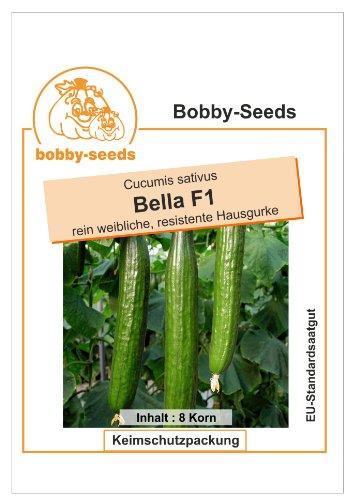 Bobby-Seeds Gurkensamen Bella F1 Gewächshausgurke Portion