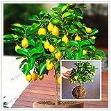 Pinkdose 20pcs / bag Zitronenbaum flores Obstbaum plantas Bonsai. Bio-gelbe Zitrone Plant Indoor-Bonsai-Anlage für Hausgarten