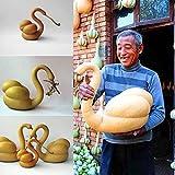 Inkeme Giardino - 10 pezzi rari zucca ornamentale a collo di cigno semi di zucca seme a collo di cigno zucca inverno hardy perenne per giardino balcone/patio