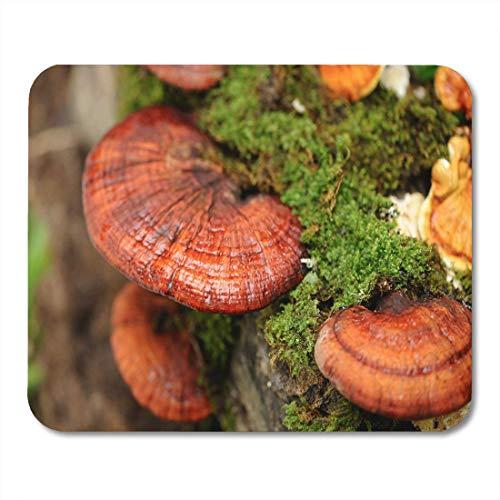 Ganoderma Lucidum Reishi (Mausunterlage Roter Reishi Lingzhi Pilz-grünes Ganoderma Lucidum Pilz-organisches Mousepad für Notizbücher, Tischrechner Mauspads)