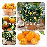 AGROBITS Promoción! 50 Pcs Balcón Patio árboles de frutas kumquat Bonsai Garden naranja mandarina Flores enano Cítricos Juicy Orange Tree Fruit: Mezcla