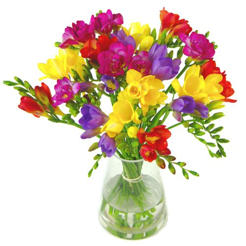 clare-florist-gorgeous-scented-freesia-fresh-flower-bouquet