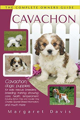 Cavachon: Cavachon